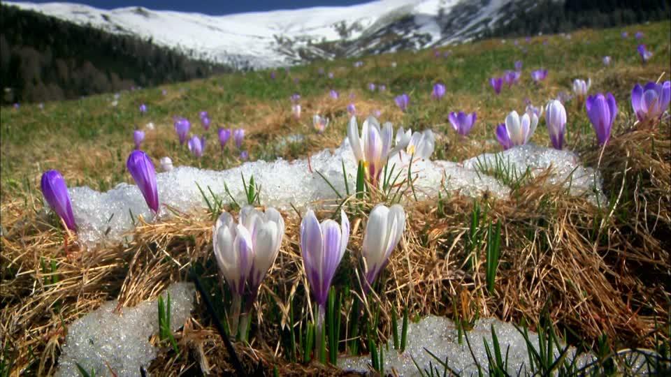 Sbrinamenti Daikin: è primavera