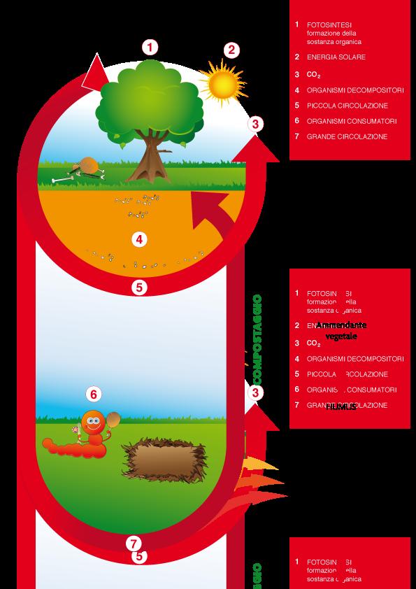 Come funziona una compostiera domestica
