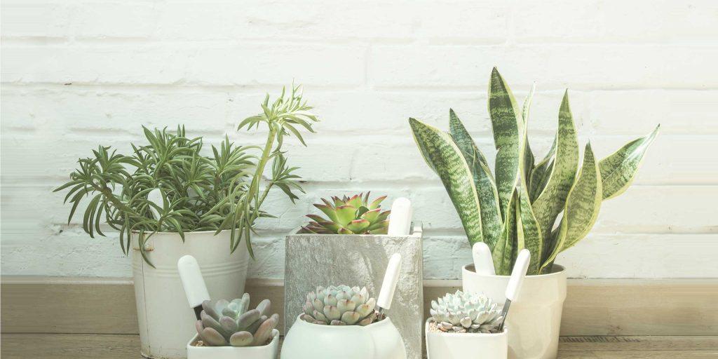 Xiaomi-Smart-Plant-Flower-Care